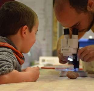 Atelier : les mystères de la fossilisation