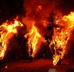 Pine trees burning